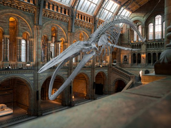 The 7 Most Weird Museums Around The World